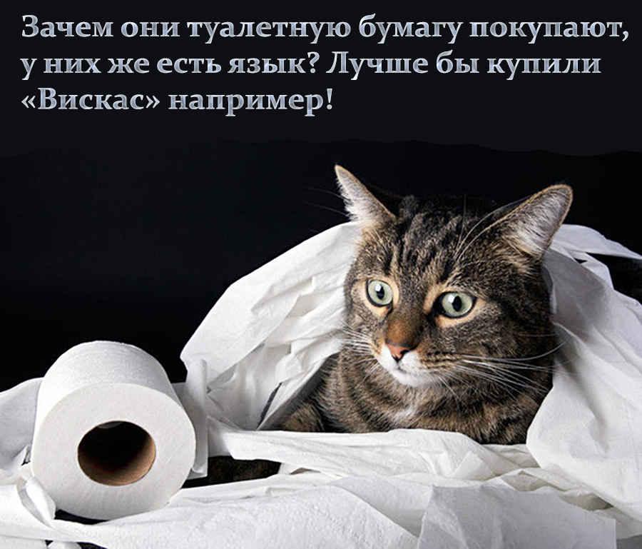 Туалетная бумага и кот