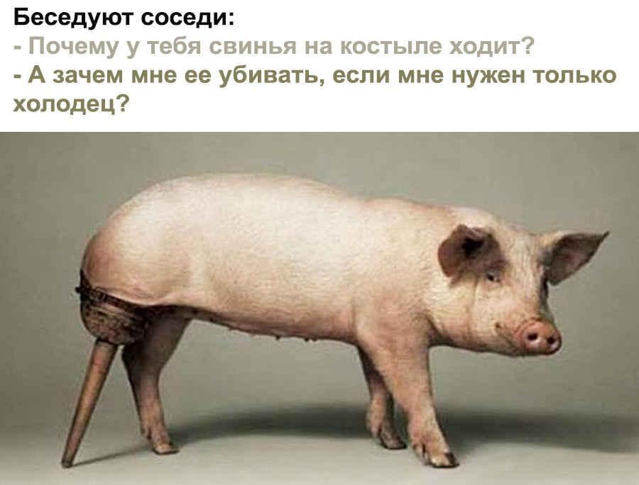 Мы еще поживем - свинячий прикол