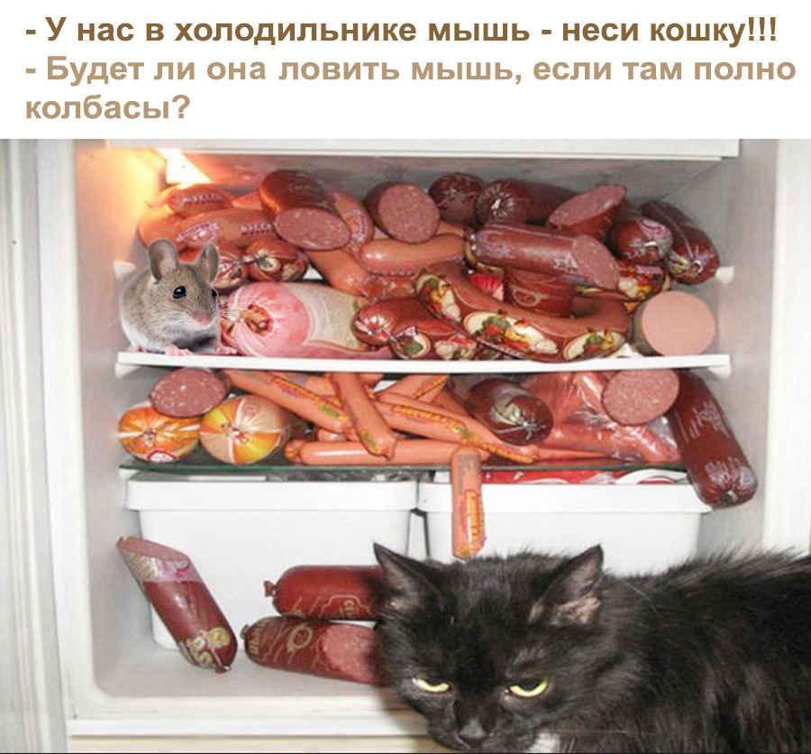 Мышь и кошка в холодильнике