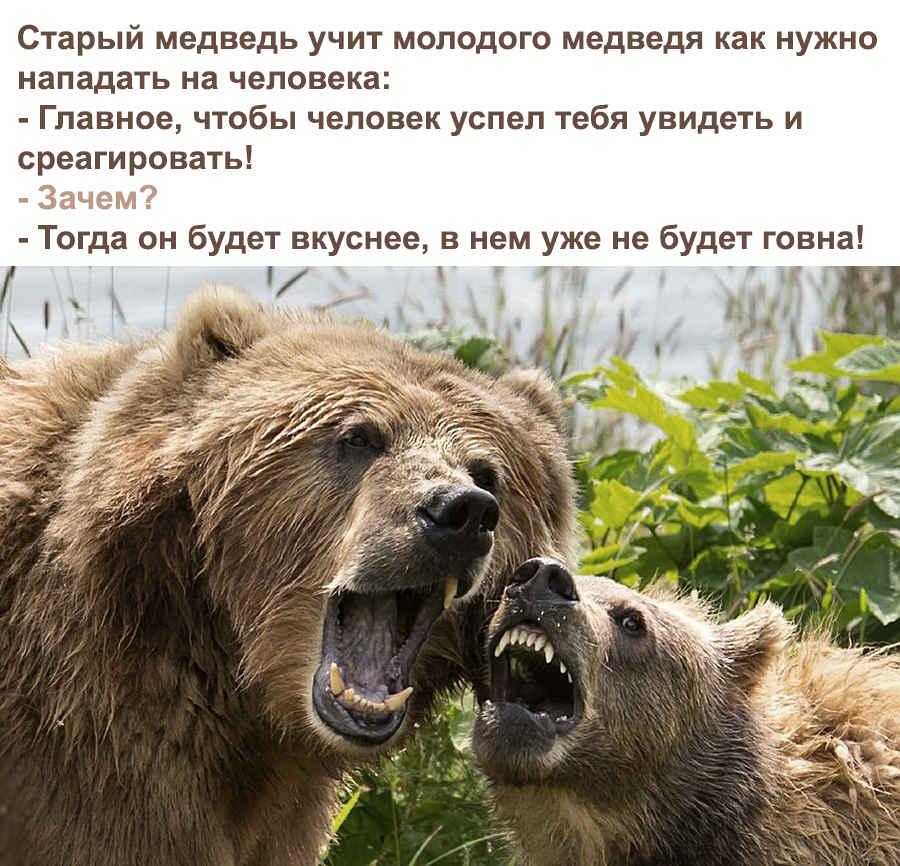 Вот о чем прикольном думают медведи!