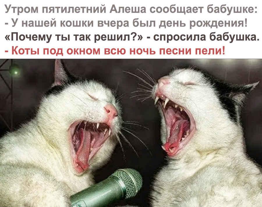 Поющие для кошки прикольные коты