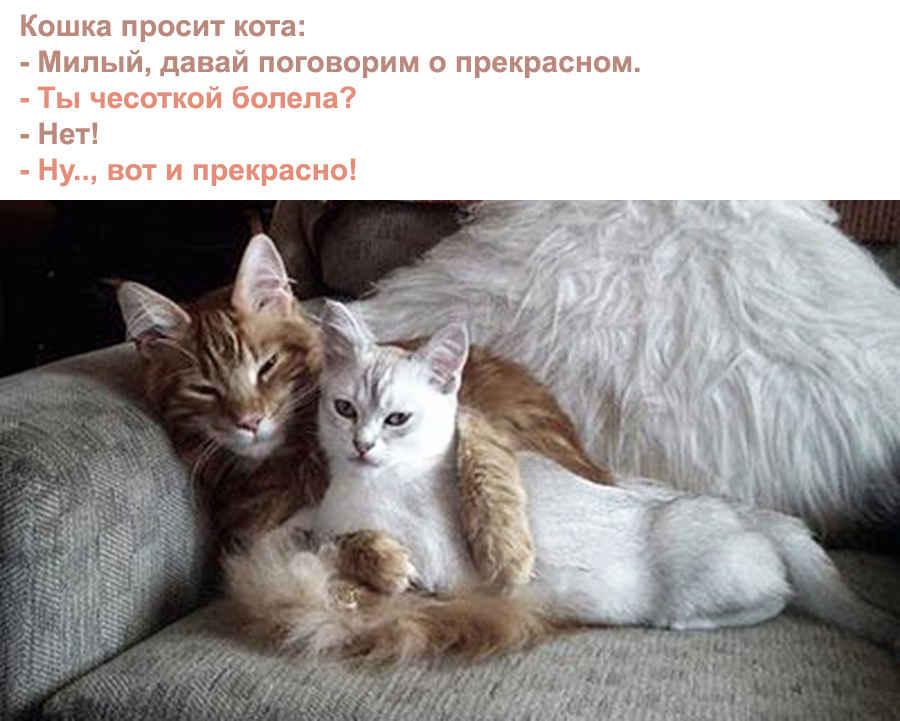Прекрасные кошки