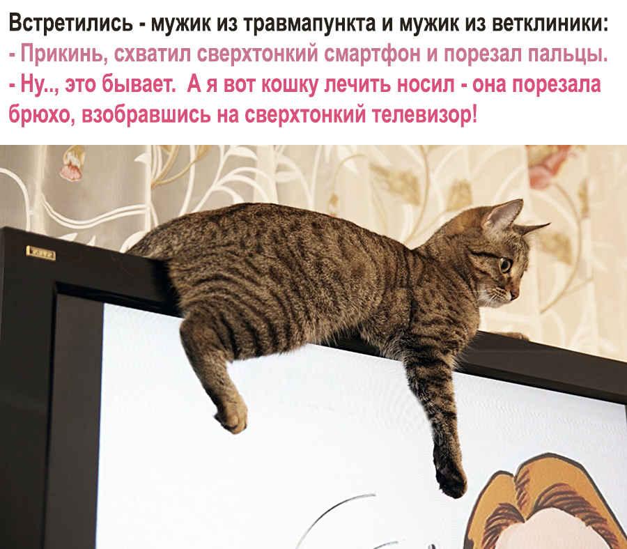 Прикол кошки на телевизоре