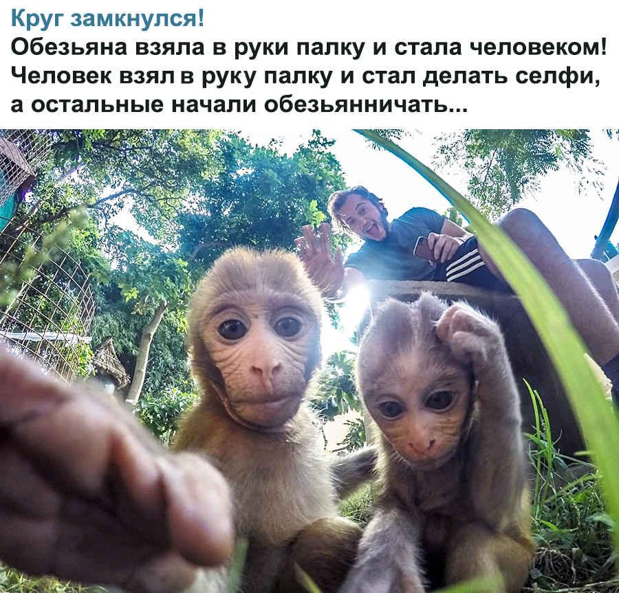 Прикол с обезьянами
