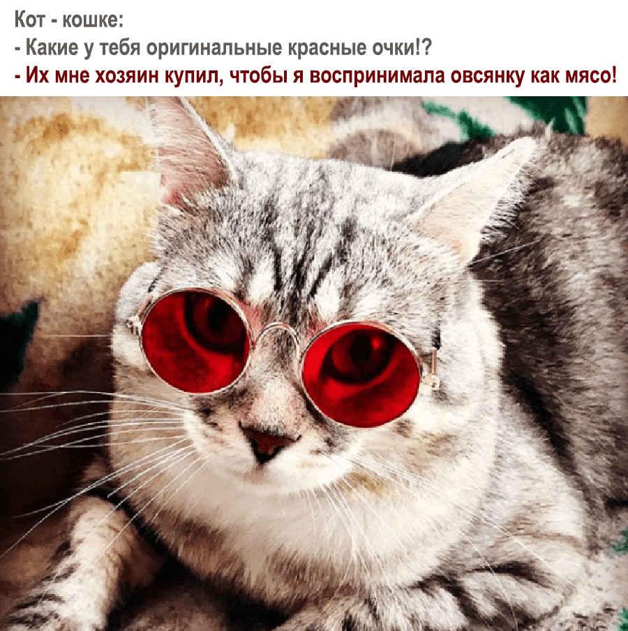 Прикол с очками для кошки