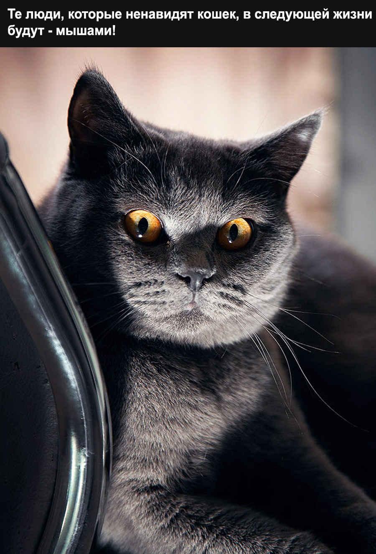 Прикольная фраза страшной кошки