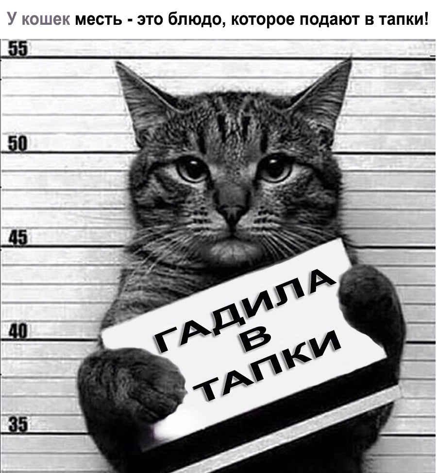 Прикол про кошку в заключении