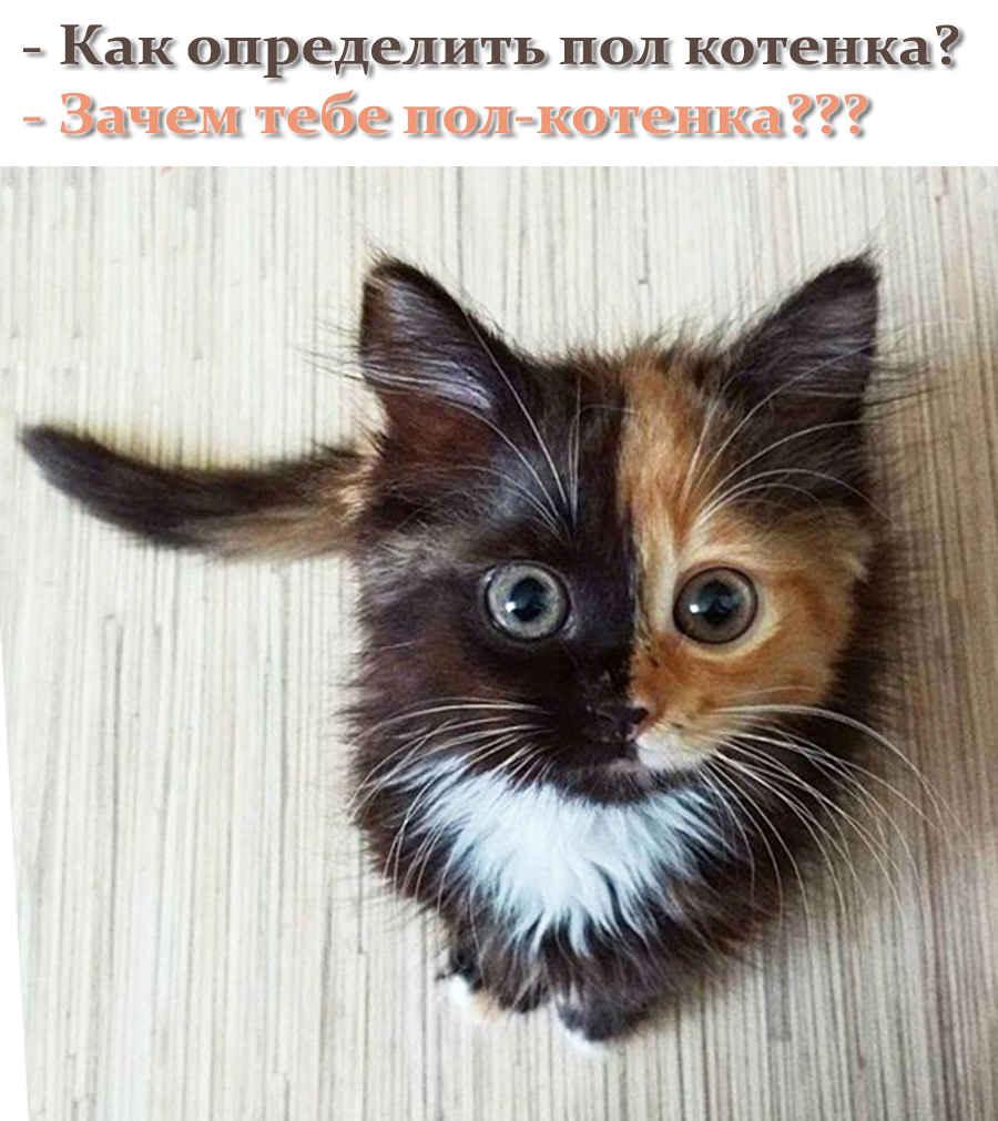 Прикольное фото - пол котенка