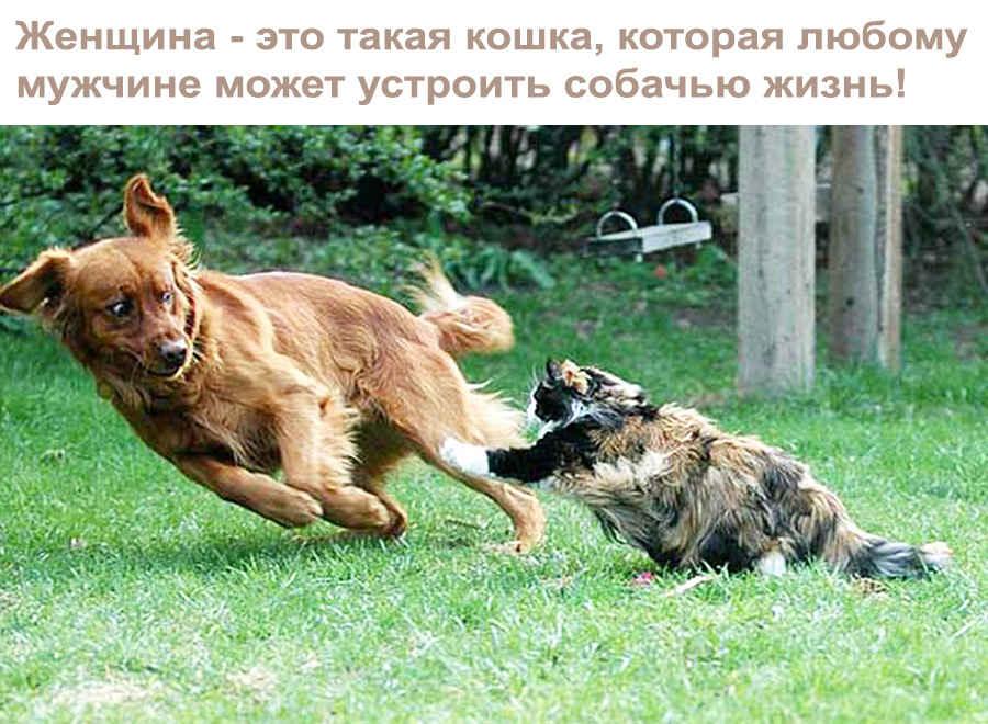 Кошачьи манеры