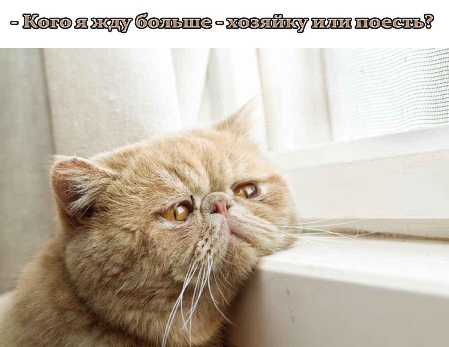 Прикольные мысли кота на фото