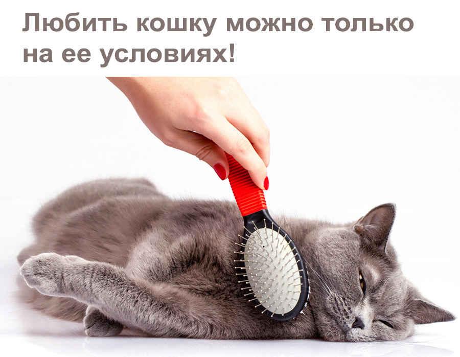 Прикольные статусы кошки