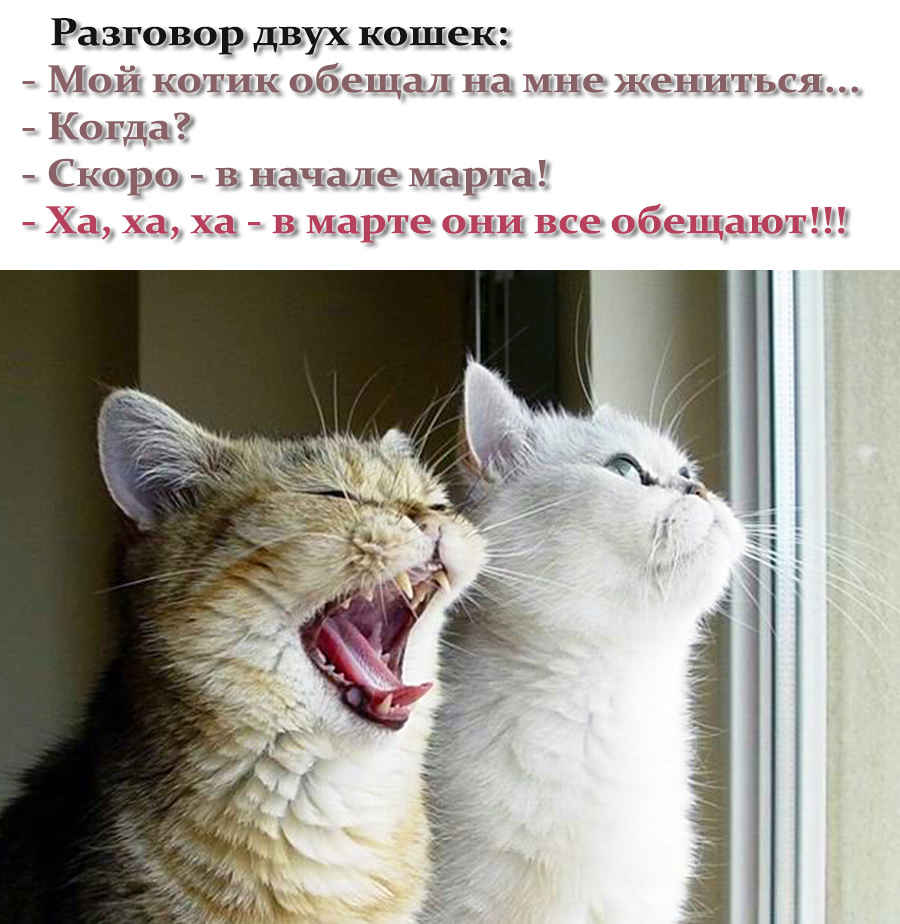 Прикольный анекдот про двух кошек