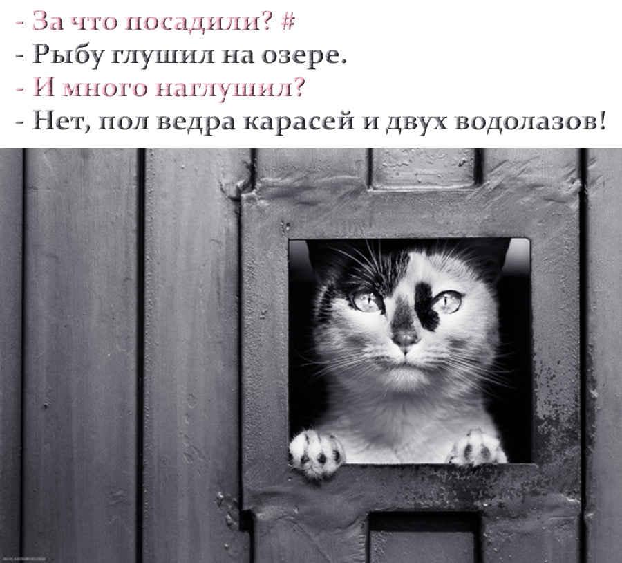 Анекдот про кота в тюрьме