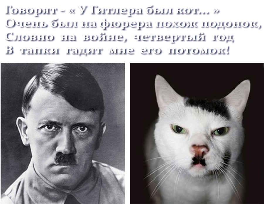 Прикольный кот Гитлера