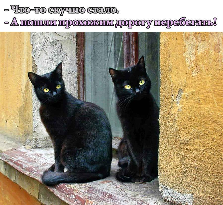 Приколы черных котов