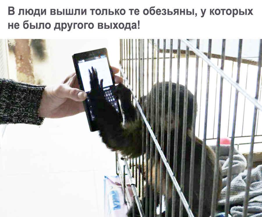 Продвинутая обезьянка