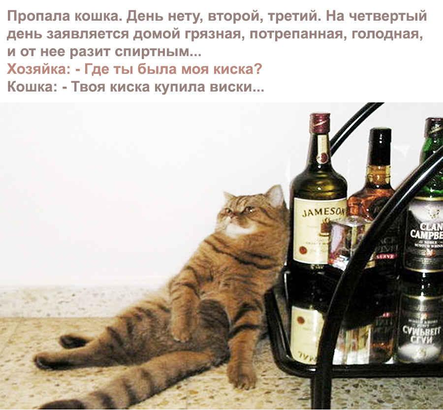 Пьяная кошка - купила виски