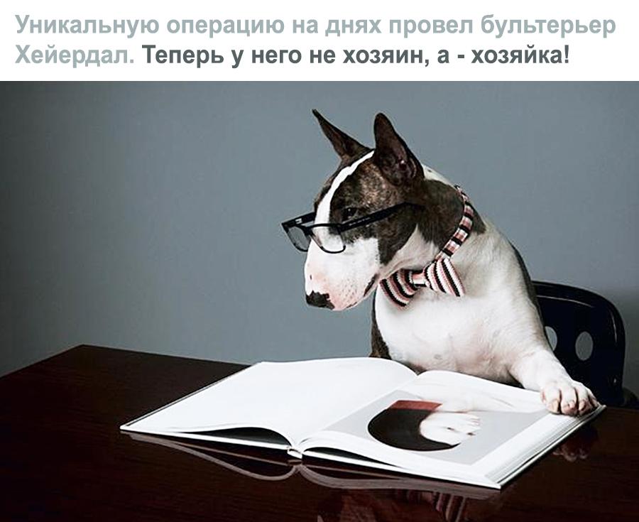 Смешное про собаку хирурга