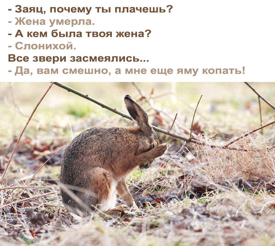 Смешной анекдот про зайца и его жену слониху