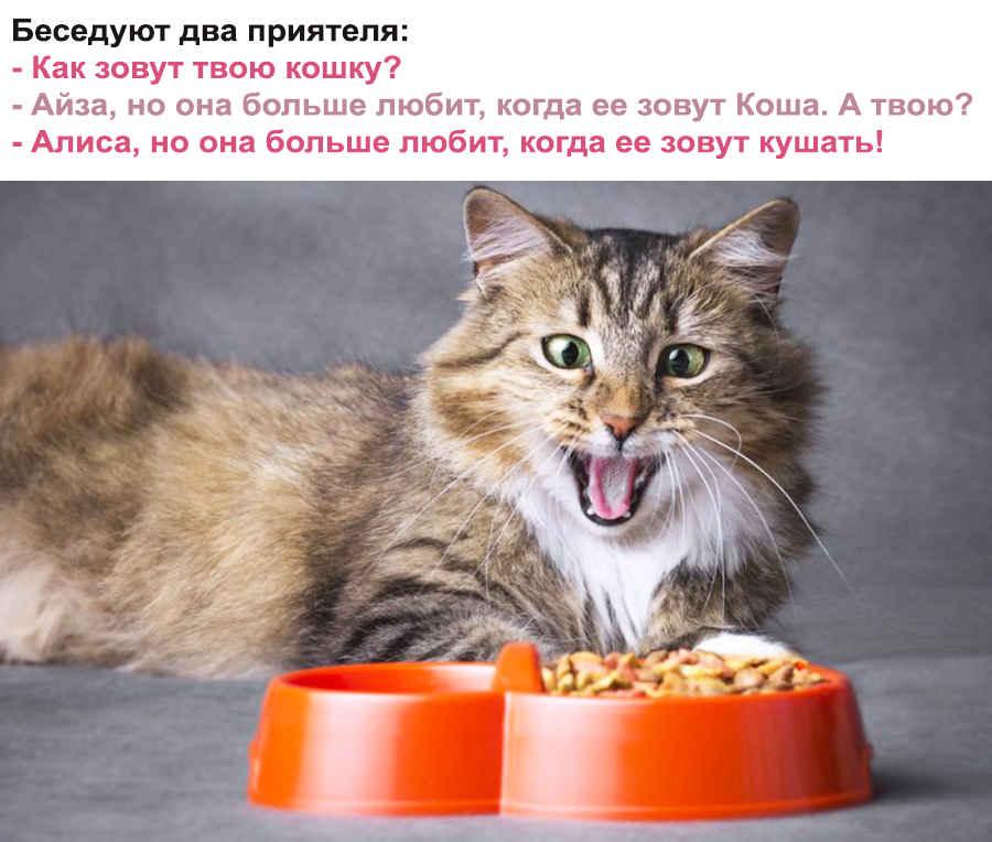 Смешной кошачий анекдот