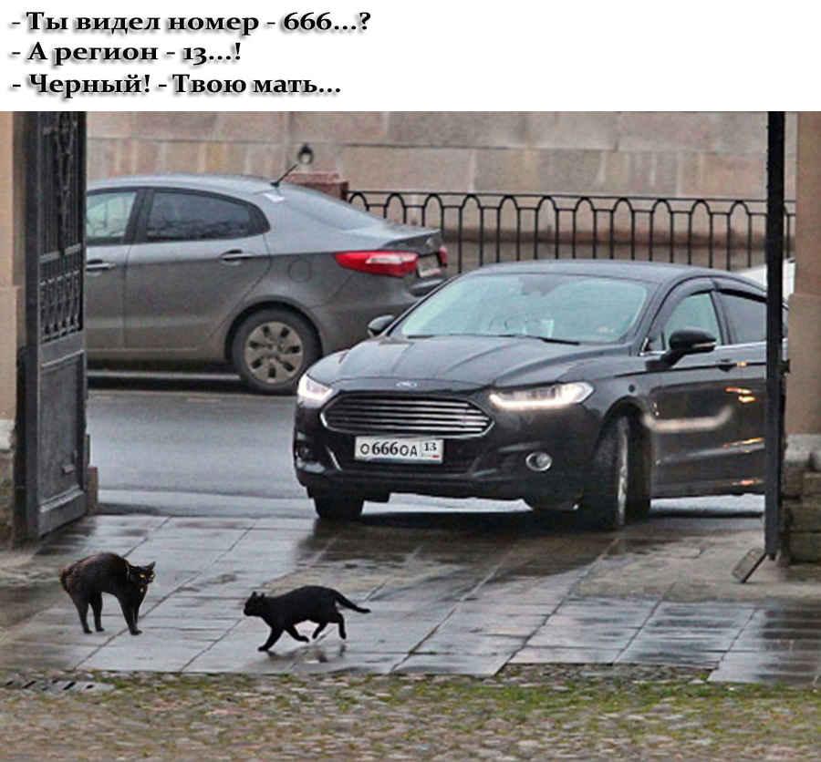 Смешные фразы котов