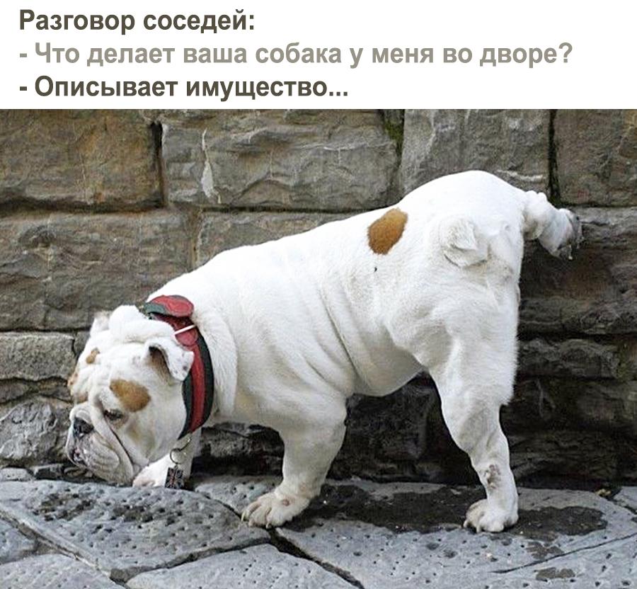 Собака, описывающая имущество