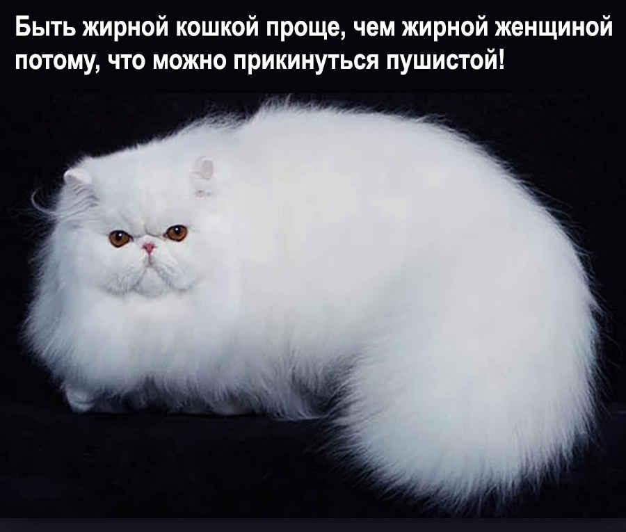 Толстая кошачья сущность