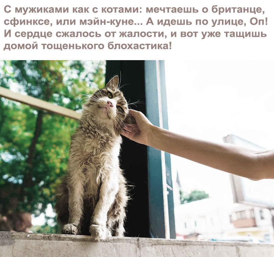 Уличный кот блохастик