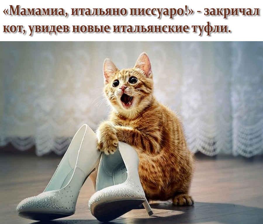 Туалет кота