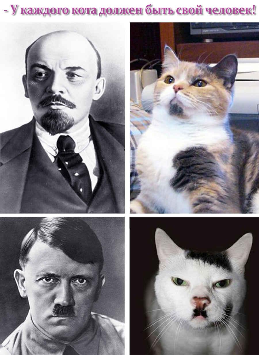 Выражение на фото по приколу про котов