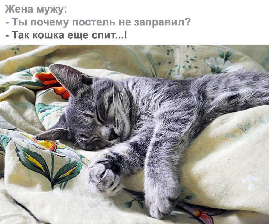 Житейская кошка