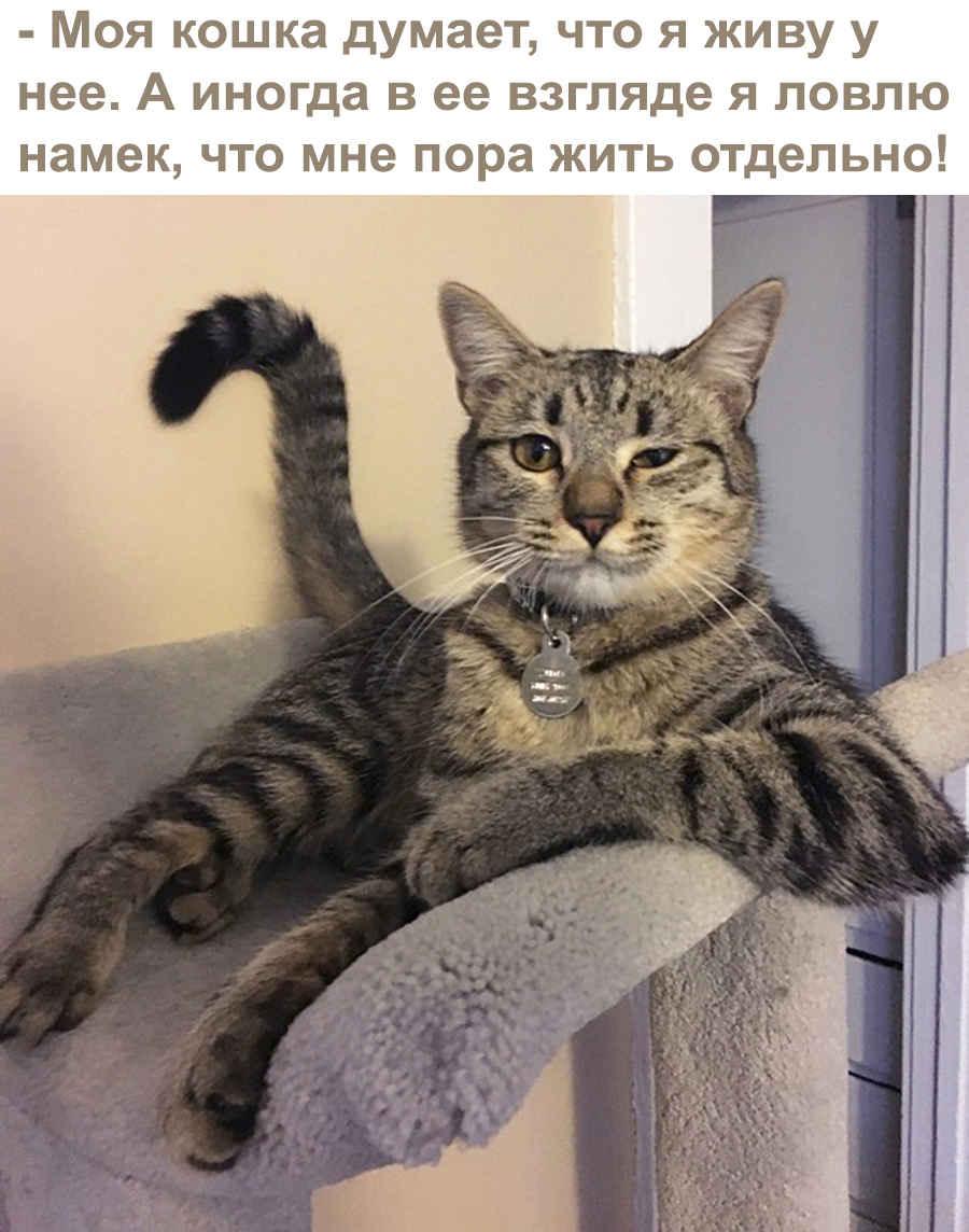 Из жизни домашних кошек
