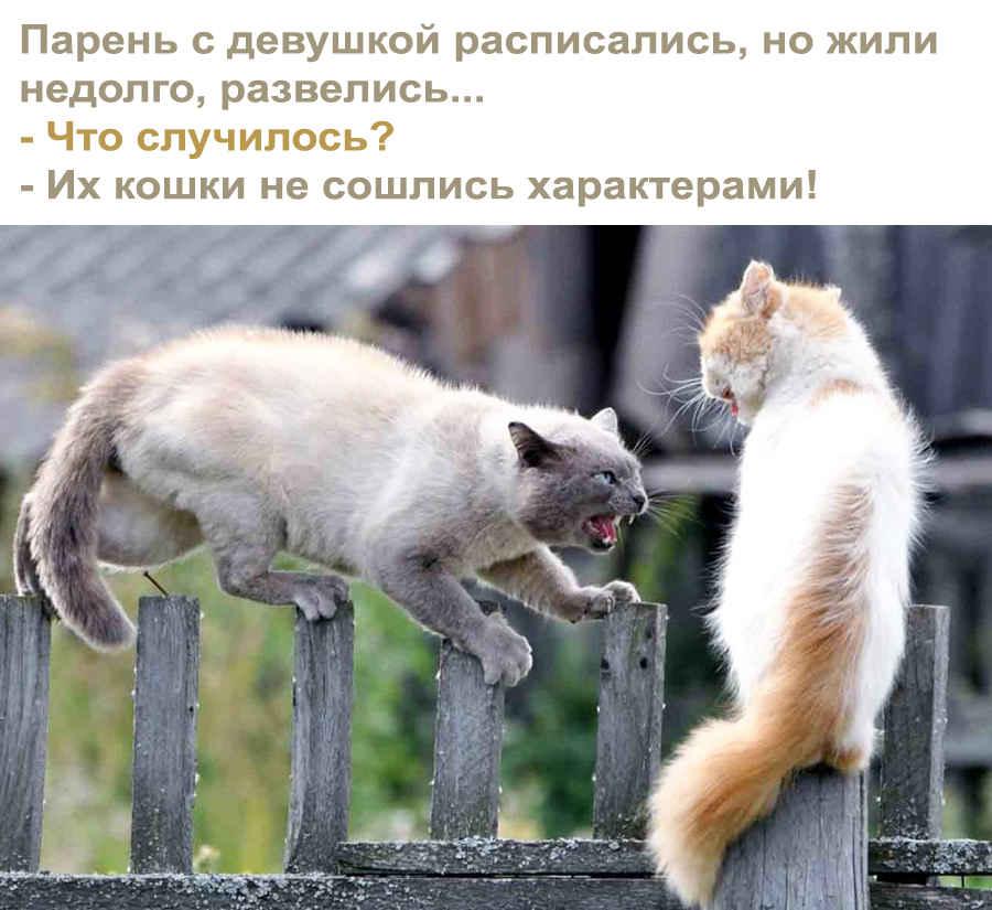 Злые кошки - приколистки