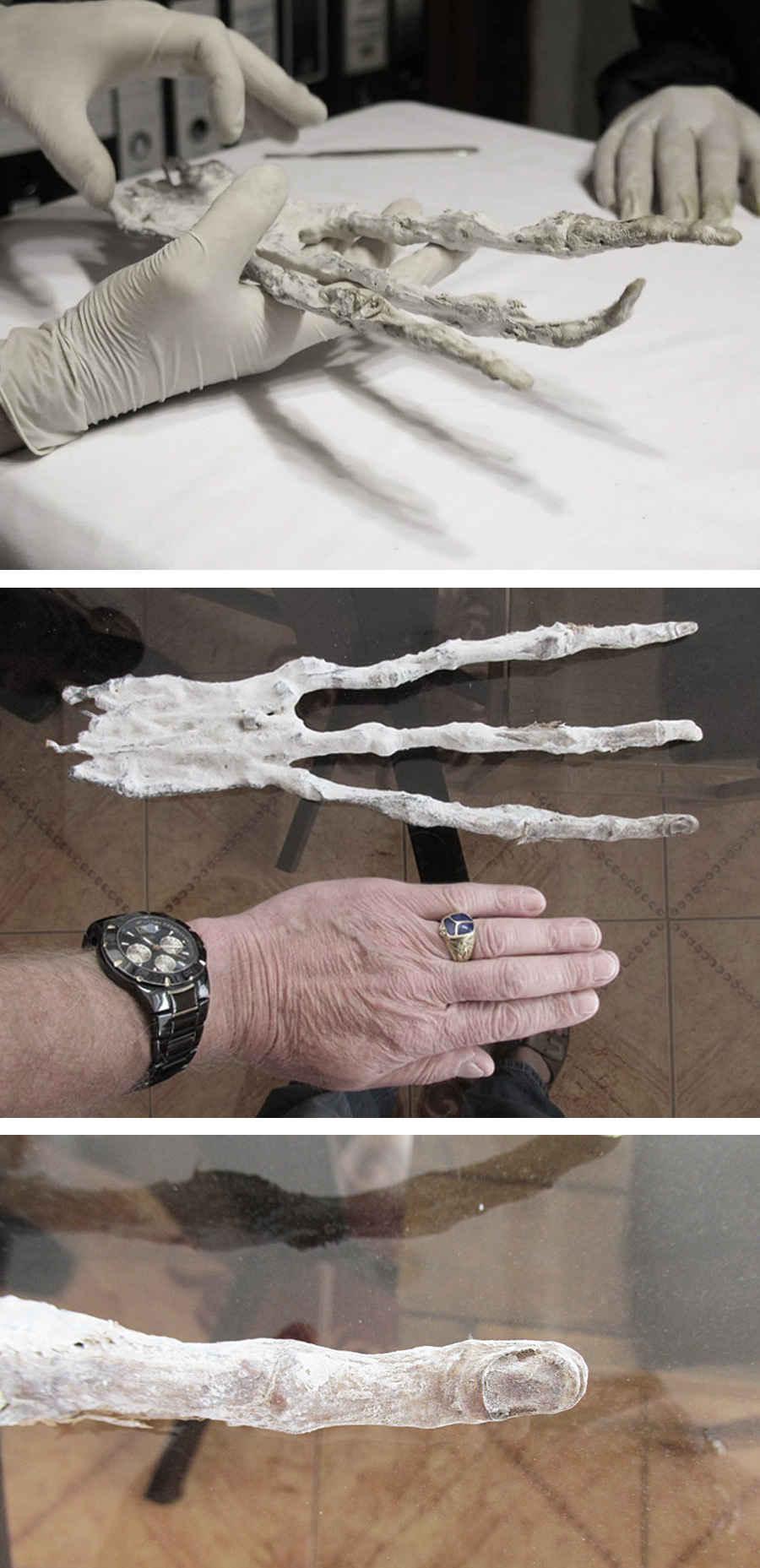 Кисти рук инопланетянина